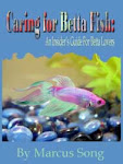The Betta Lover's Guide