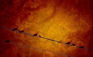 பாரதியின் கவிதைகள் : குயில் பாட்டு : குயிலின் பாட்டு