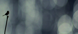 பாரதியின் கவிதைகள் : குயில் பாட்டு : குயிலும் குரங்கும்