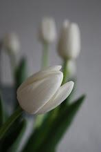 ...tulipanar