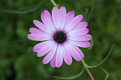 Single And Beautiful Flowers
