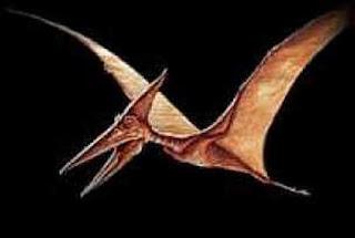 external image pterodactilo11xq1-2.jpg