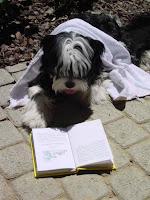chien lisant