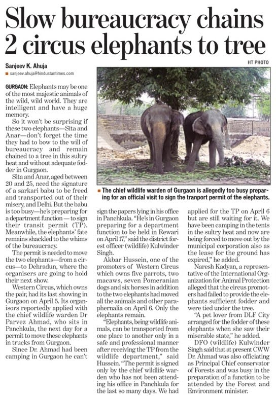 Ban Elephants abuse in circus like Indian Zoo's
