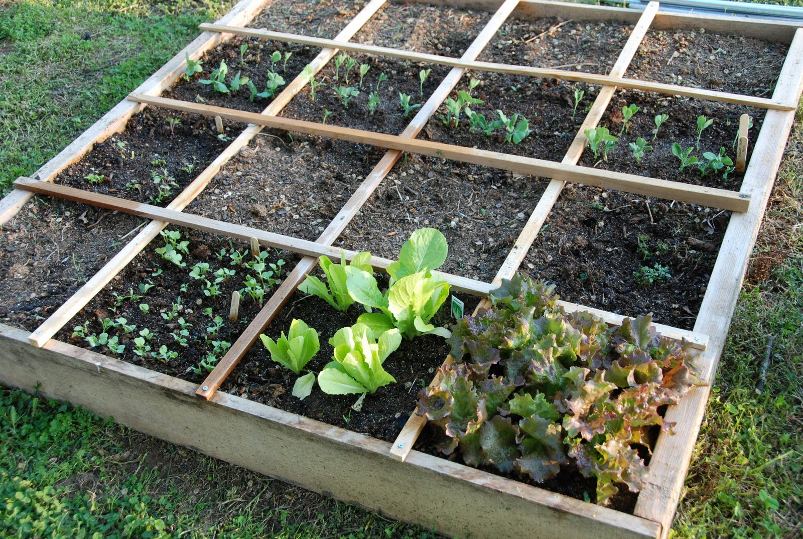Watering Your Square Foot Garden