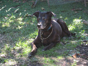 Beautiful Grace, spring 1997 - 12/19/11