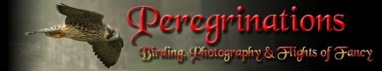 Peregrinations