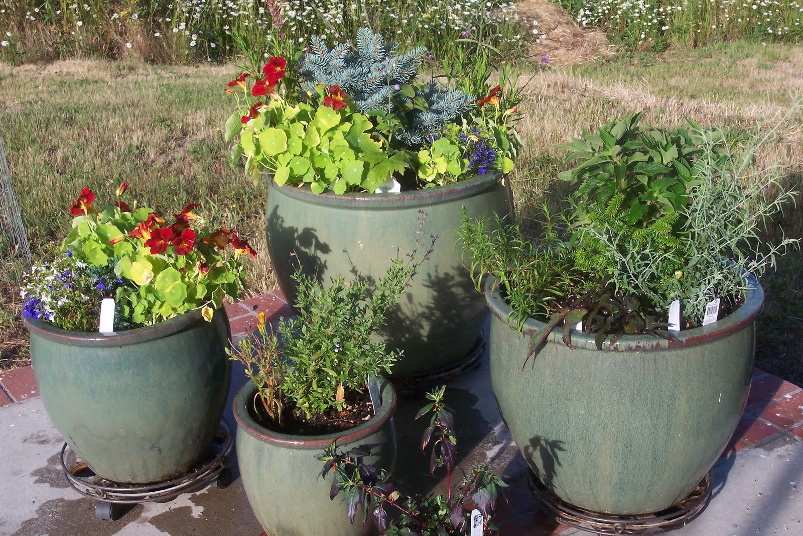 Arcilla de tierra clanes - The Sensible Gardener