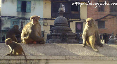monkey temple , swayambhunath