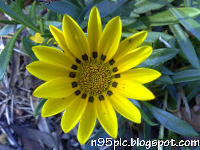 pictures of flowers,n95 pictures,flowers in n95 mobile, mobile photography,n95 mobile