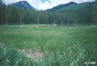 Big Creek Lakes