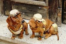 Perfect Dogs - Ciudad de La Habana - CUBA