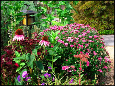 Fall Show From Hardy Garden Mums