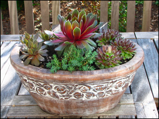 Defining Your Home Garden and Travel Garden Plants Best