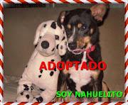 NAHUELITO ADOPTADO