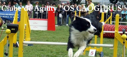 Flyball
