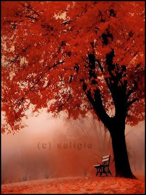 Karlos Ruiz Zafon Under_red_tree_by_saligia