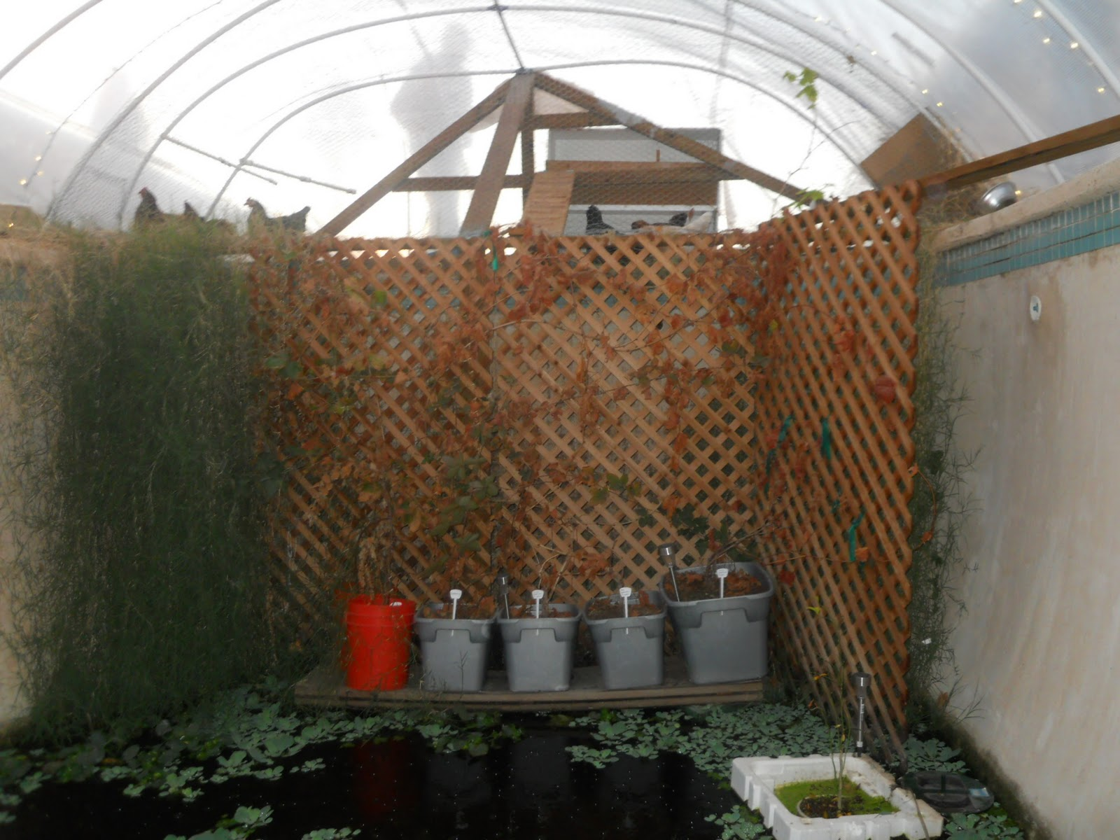 Their Unwanted Pool Into A Sustainable Aquaponic Garden