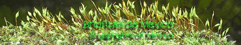 Briofitas de Mexico