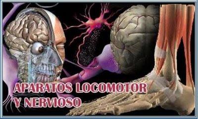 external image aparato+locomotor+y+nervioso.JPG