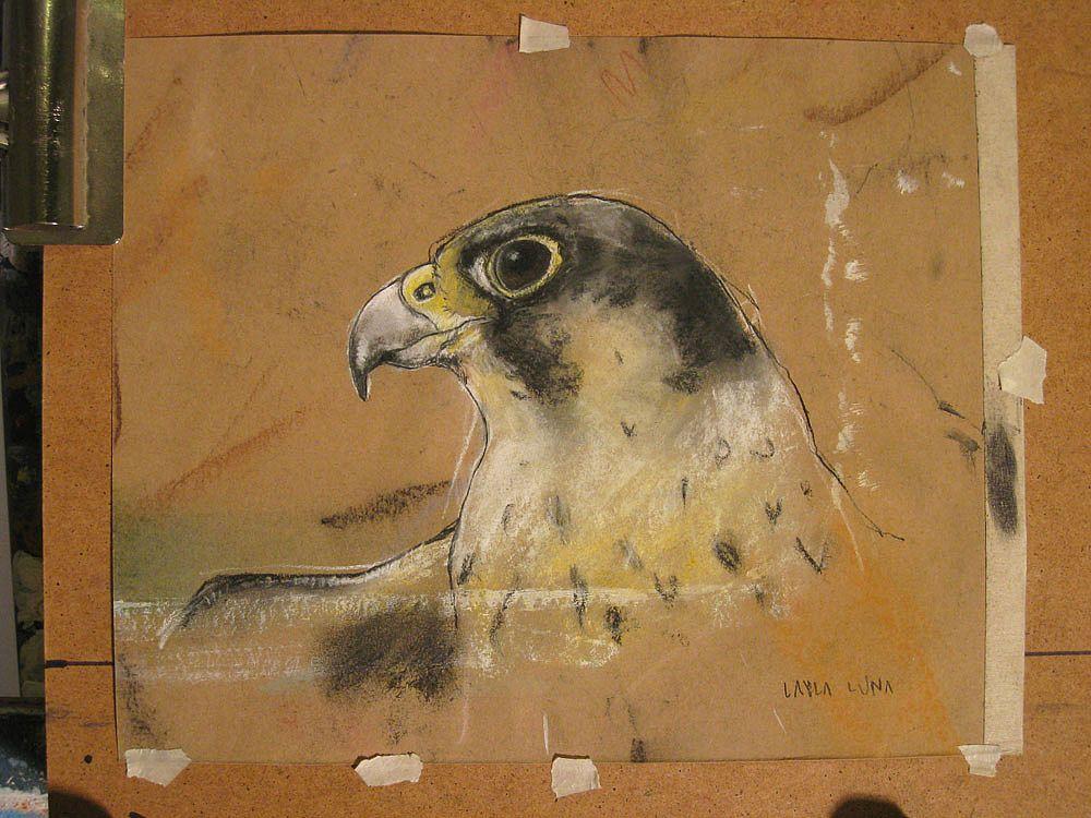 Peregrine Falcon Sketch Peregrine Falcons Are Known