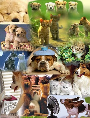 Portal de las Mascotas Mascotas+portal