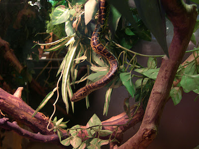 Reptiles – Introducción Irep_04