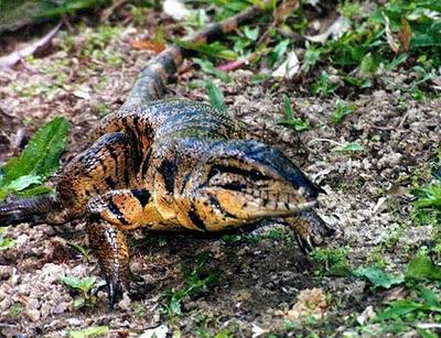 Reptiles – Introducción Prep_03