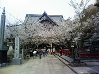 cherryblossoms at Kimii Dera
