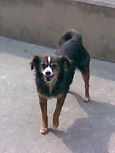 Tachuela adoptada
