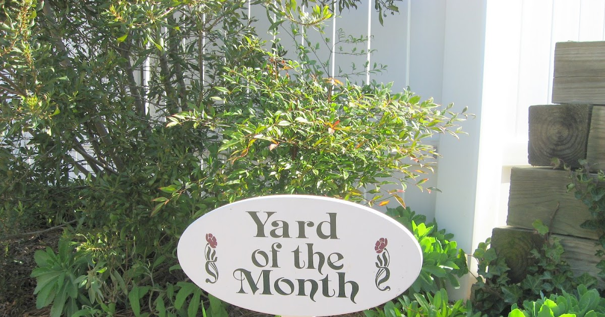The Accidental Gardener Yard Of The Month Yes