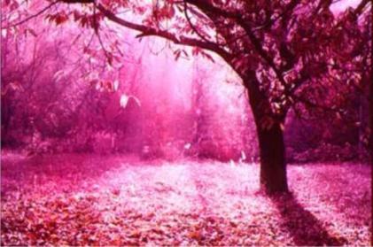 http://4.bp.blogspot.com/_7nv6gXbKoWI/SXDQ7HQ520I/AAAAAAAAAB0/gu55sYpSffU/S660/1192211342_cor_de_rosa.jpg