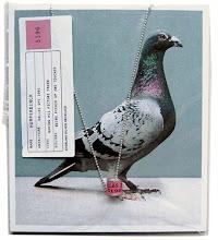Esta es la paloma mensajera que traerá tus palabras.