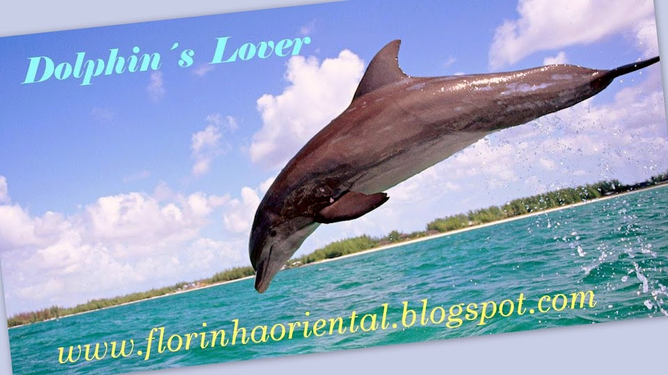 Dolphin´s Lovers