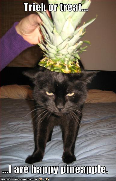 Lion Cut | Funny Cat Pictures | Entertainment Funny Cat Site Pics