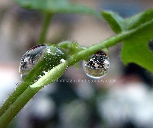 Raindrops-macro photo