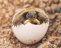 ¿Cuáles son los animales ovovivíparos? Microrespuestas - fotos de animales oviparos