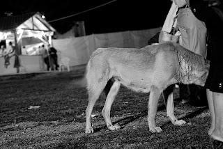 dog_in_street