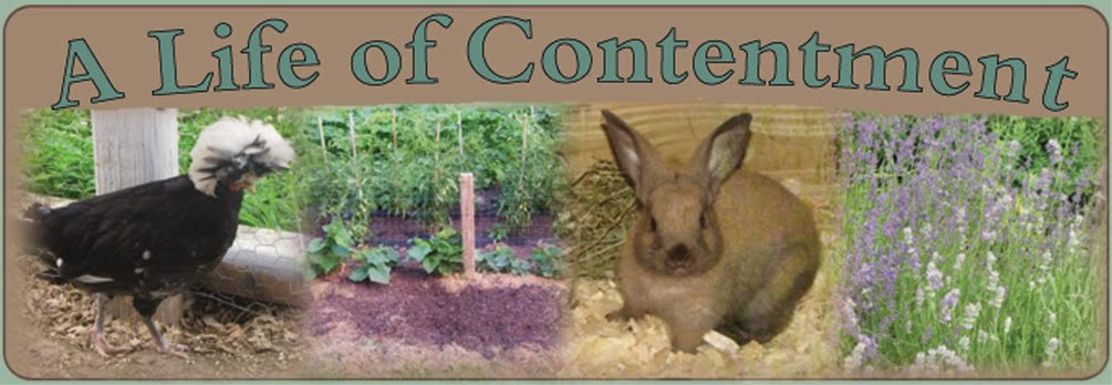A Life of Contentment