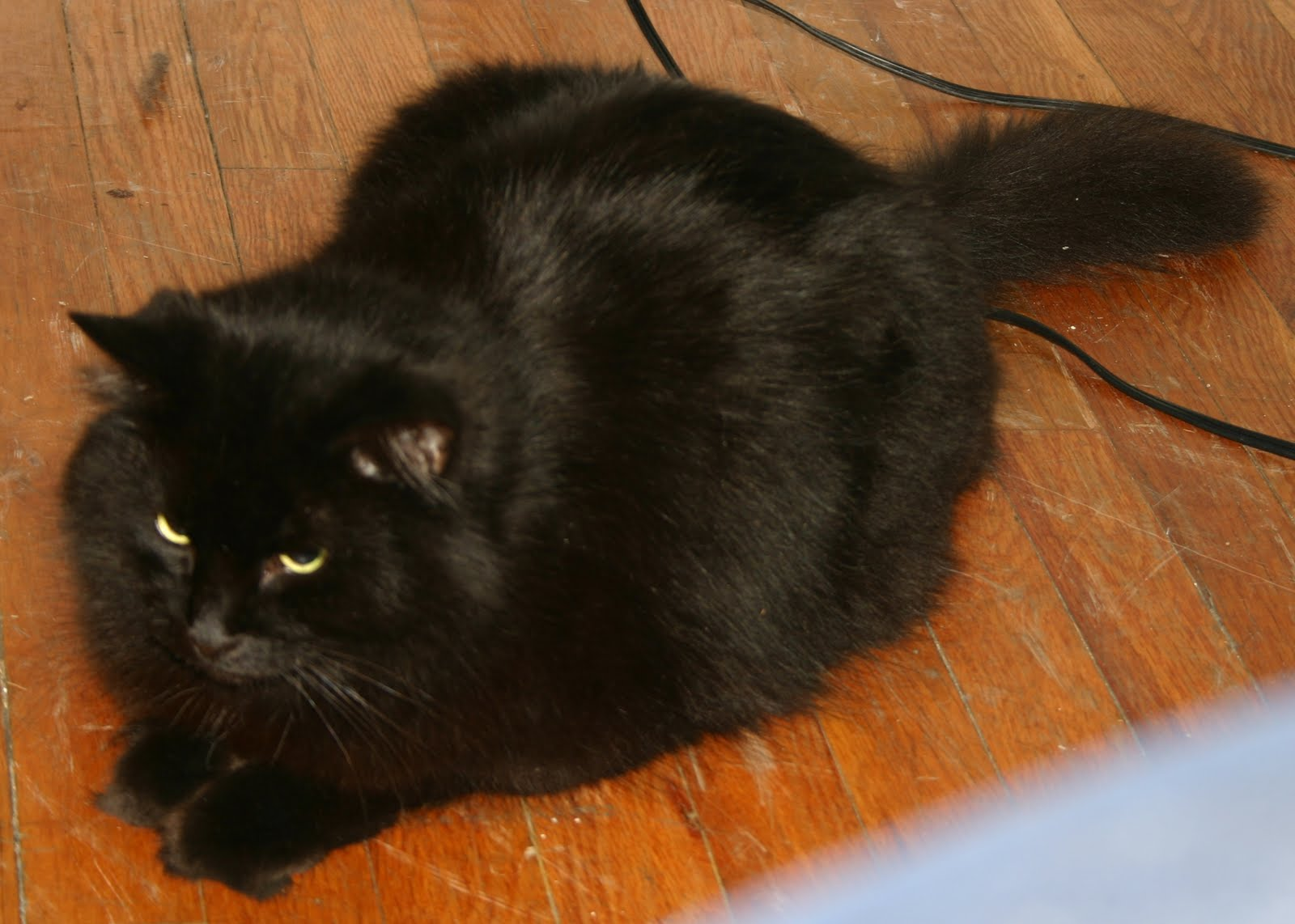 This is Tenz, my fat black cat who I love dearly, and have emotionally ...