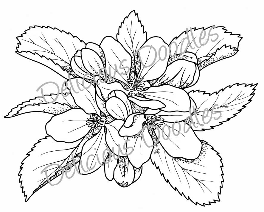 Primrose Flower Drawing Sketch Coloring Page