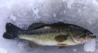 Guided vermont ice fishing trips vermont ice fishing for Ice fishing for bass