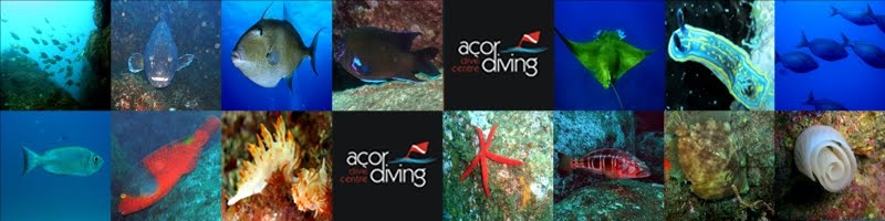 Açordiving - Dive Centre