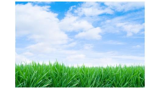 http://4.bp.blogspot.com/_7sTEE3j9qog/TUgZZfOUi-I/AAAAAAAAACE/-39Ht_njP3A/s1600/green-grass-blue-sky.jpg