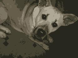 Anjing Bisa Juga Merasa Pesimis
