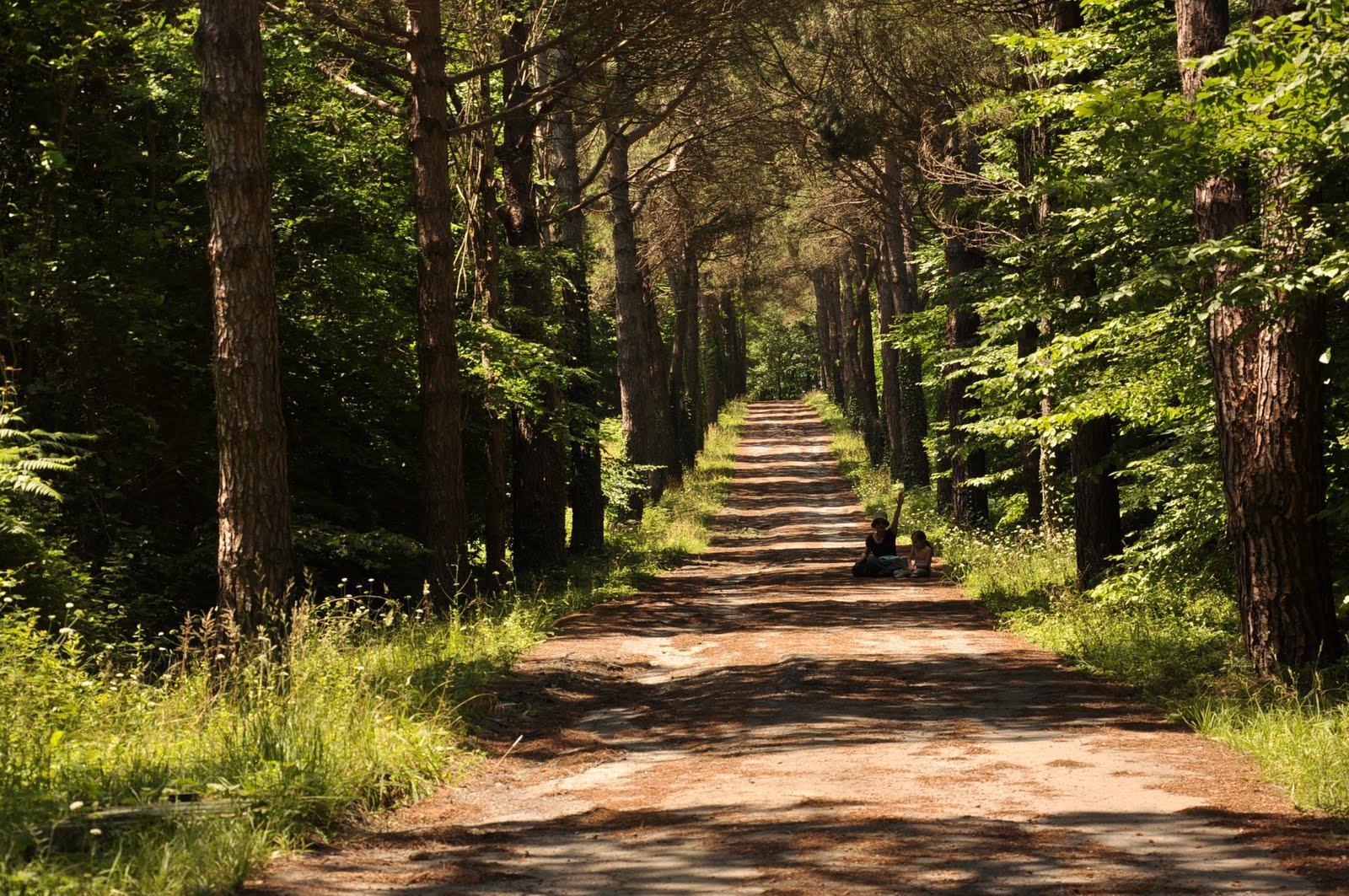 my vision: Ataturk Arboretumu-Ağaçlı Yol