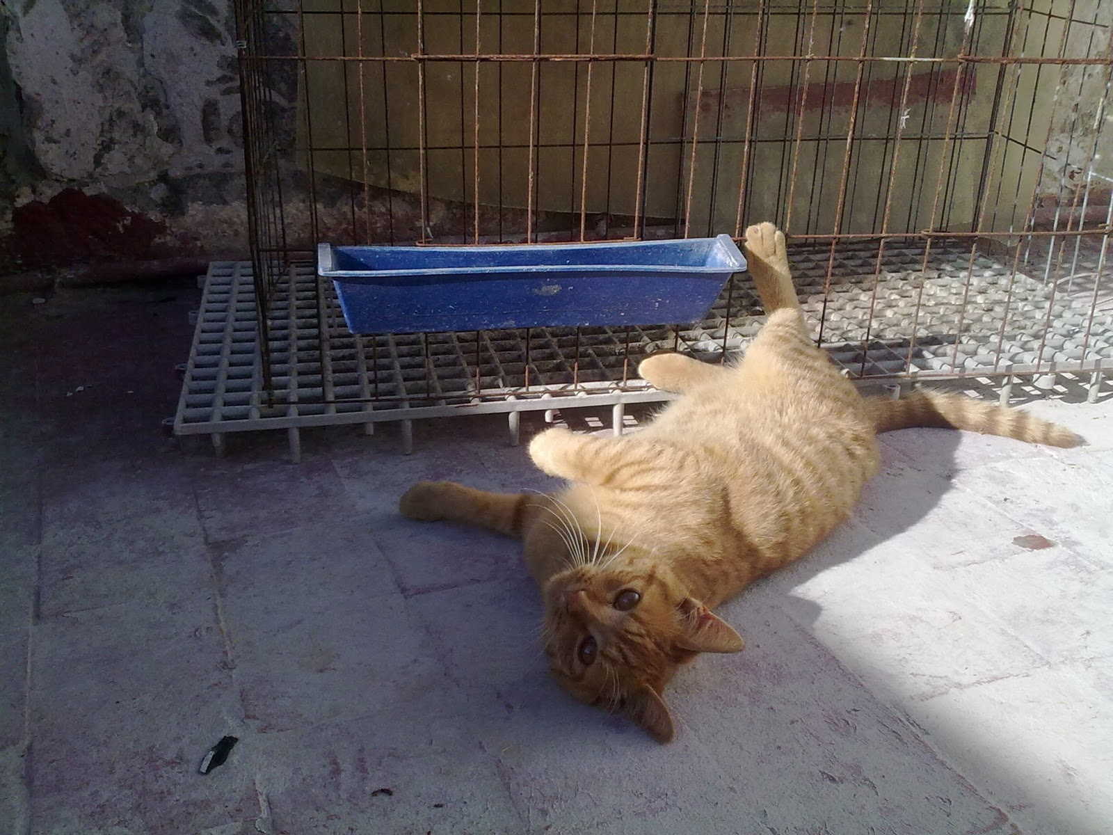 Esperando palomas otro hijo de gato en mi palomar - Cazar ratones en casa ...