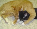 Simon healing a traumatized kitten