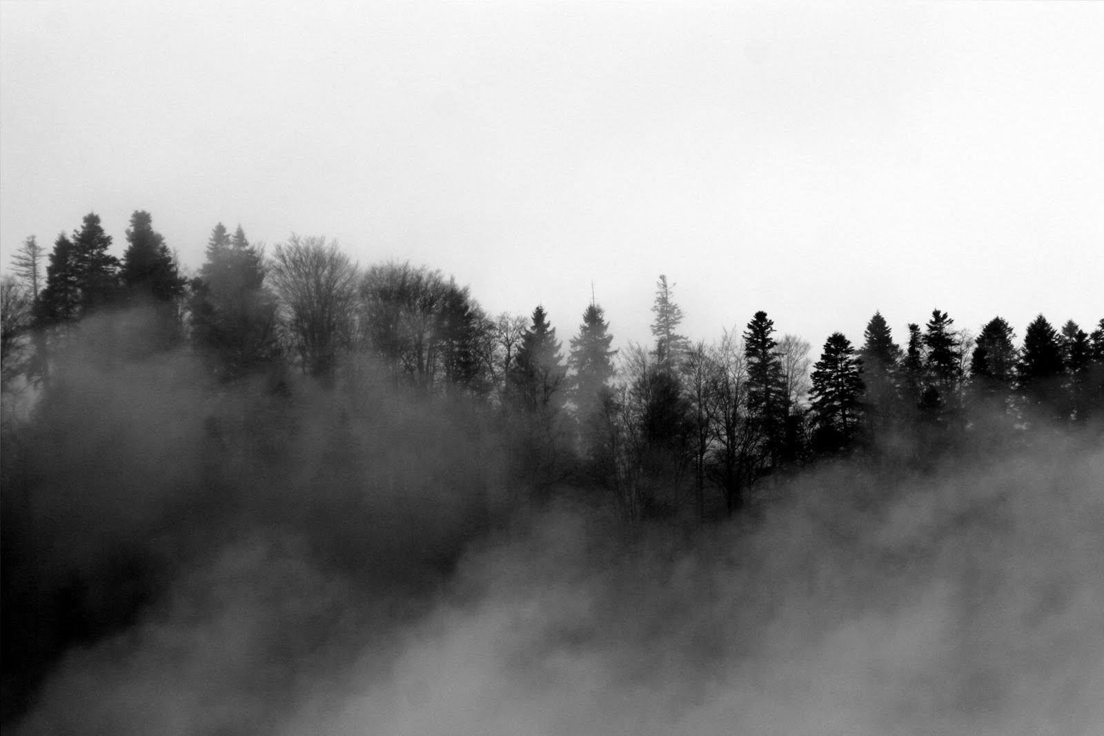 foggy forest by a - photo #28