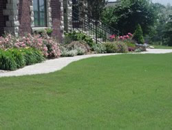 Buffalo grass dutch touch landscaping services